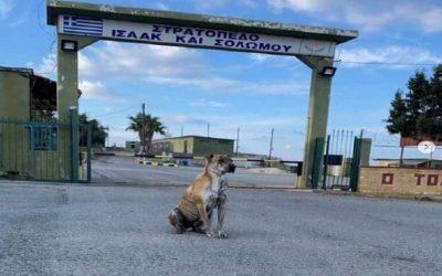 Η Εθνική Φρουρά υιοθετεί τον Μπρούνο | Αντιδράσεις από το Κόμμα για τα Ζώα
